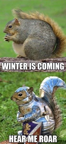 Iron Squirrel