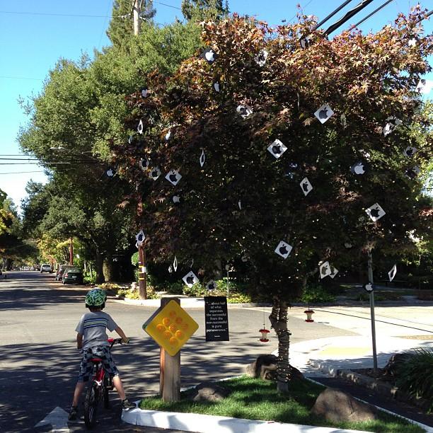 喬布斯在Palo Alto的房子附近的一棵小樹